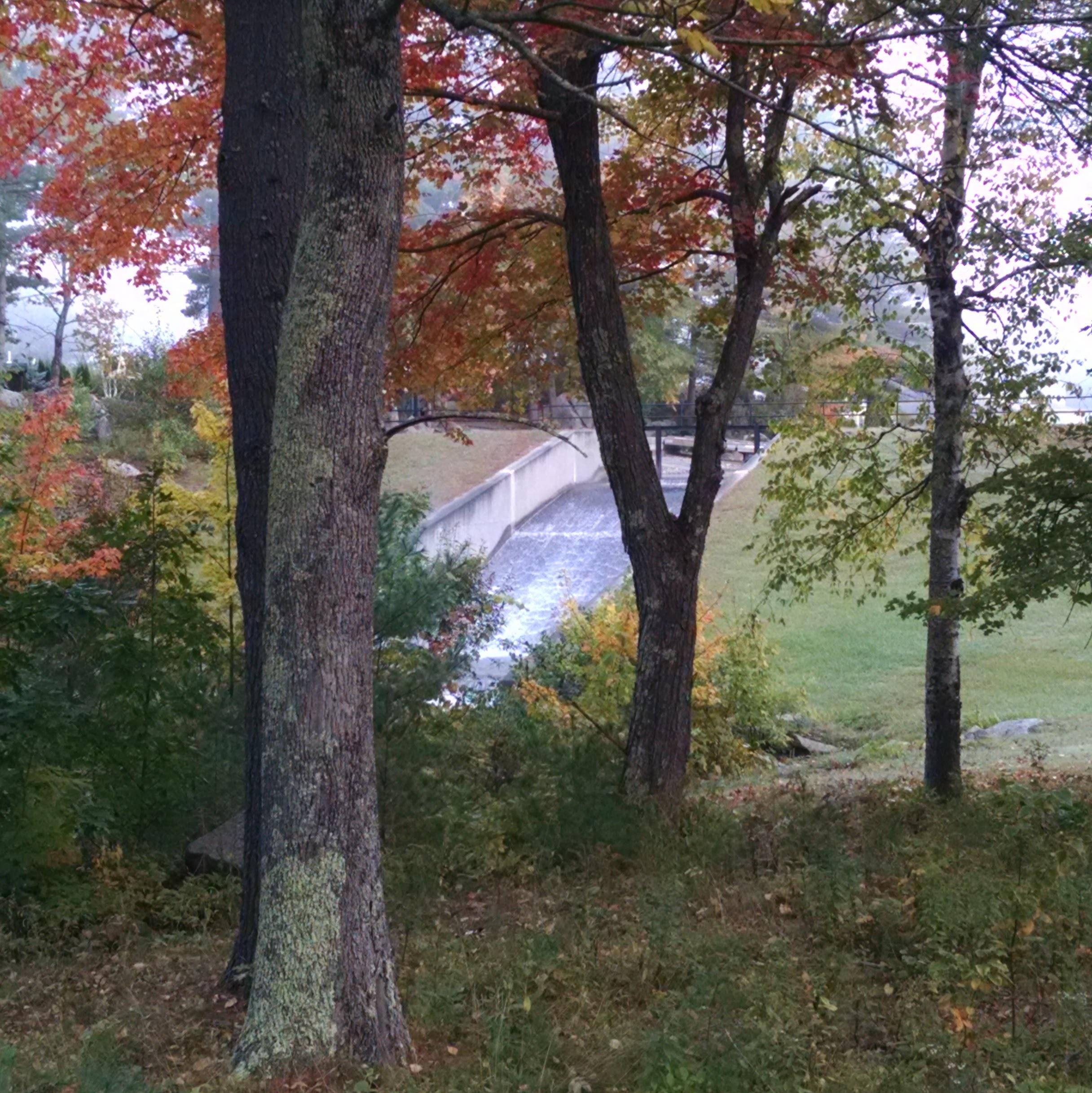 The dam again...as spied through the trees.
