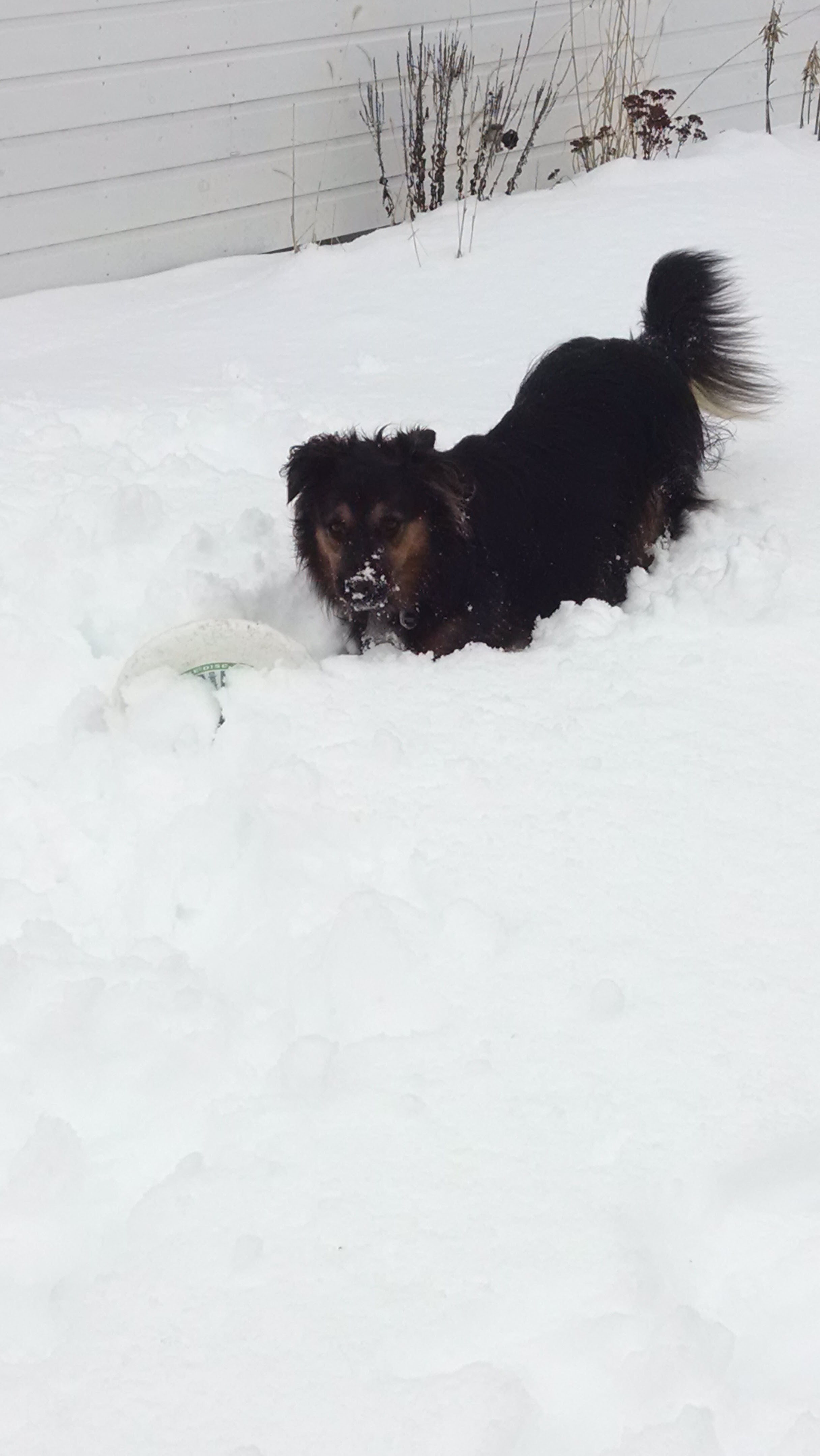 Tuckerman making the most of the snow.