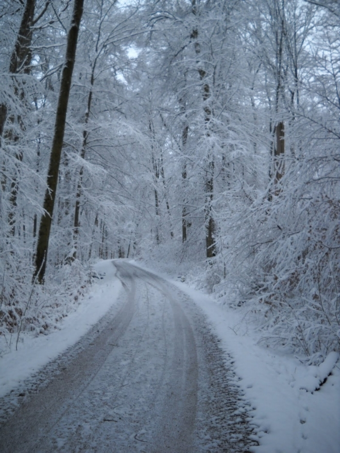 Running in the snow.JPG
