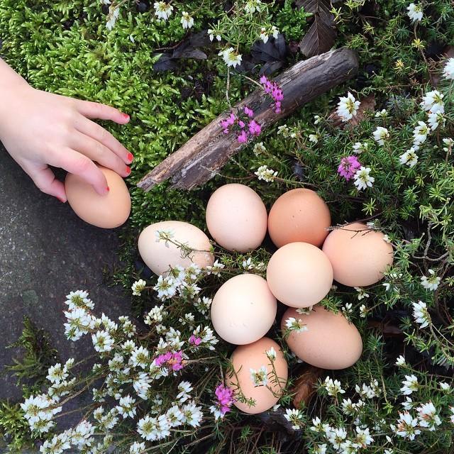 our lovely neighbor gave us eggs from her garden #organicfarming