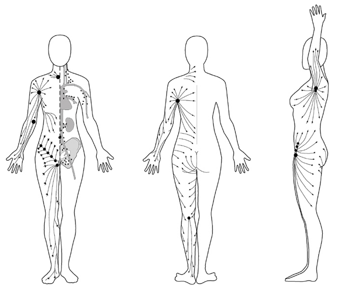 Lymphatic System Chart of Body