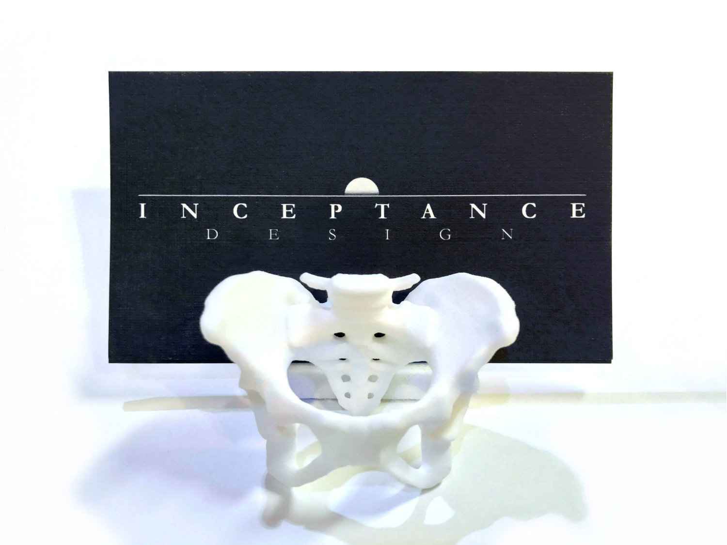 pelvis business card holder.jpg