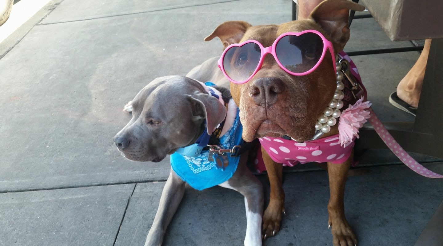 Our Fave Canine Celebs, Pumpkin Pie & Brucie