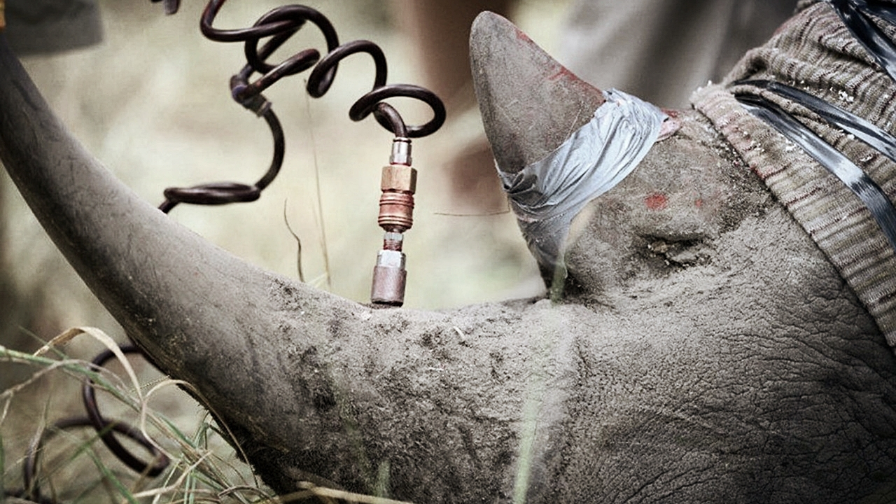 The Rhino Rescue Project, Sabi Sands