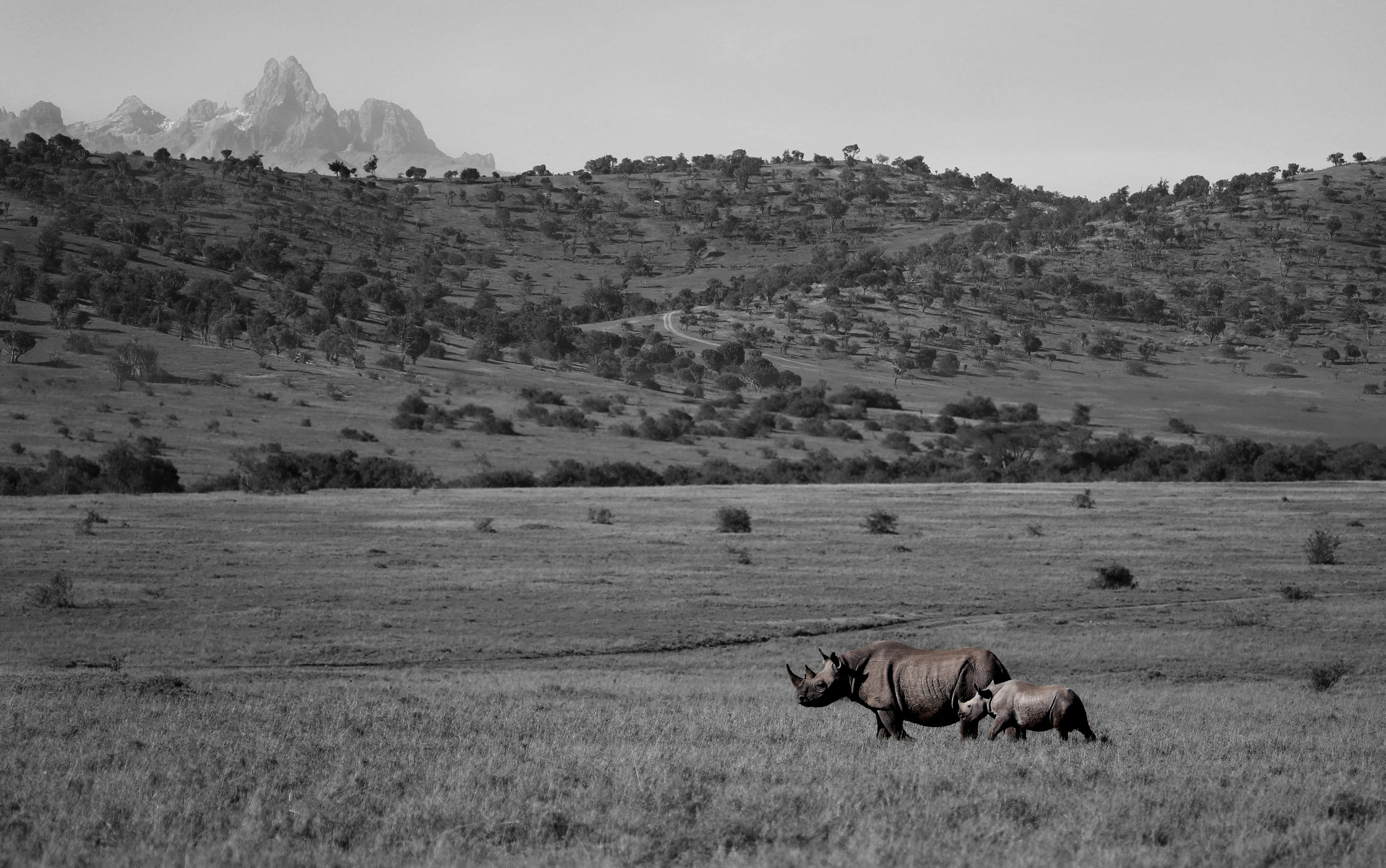 Photograph by Kirsten Brophy, 2017 Lewa Conservancy