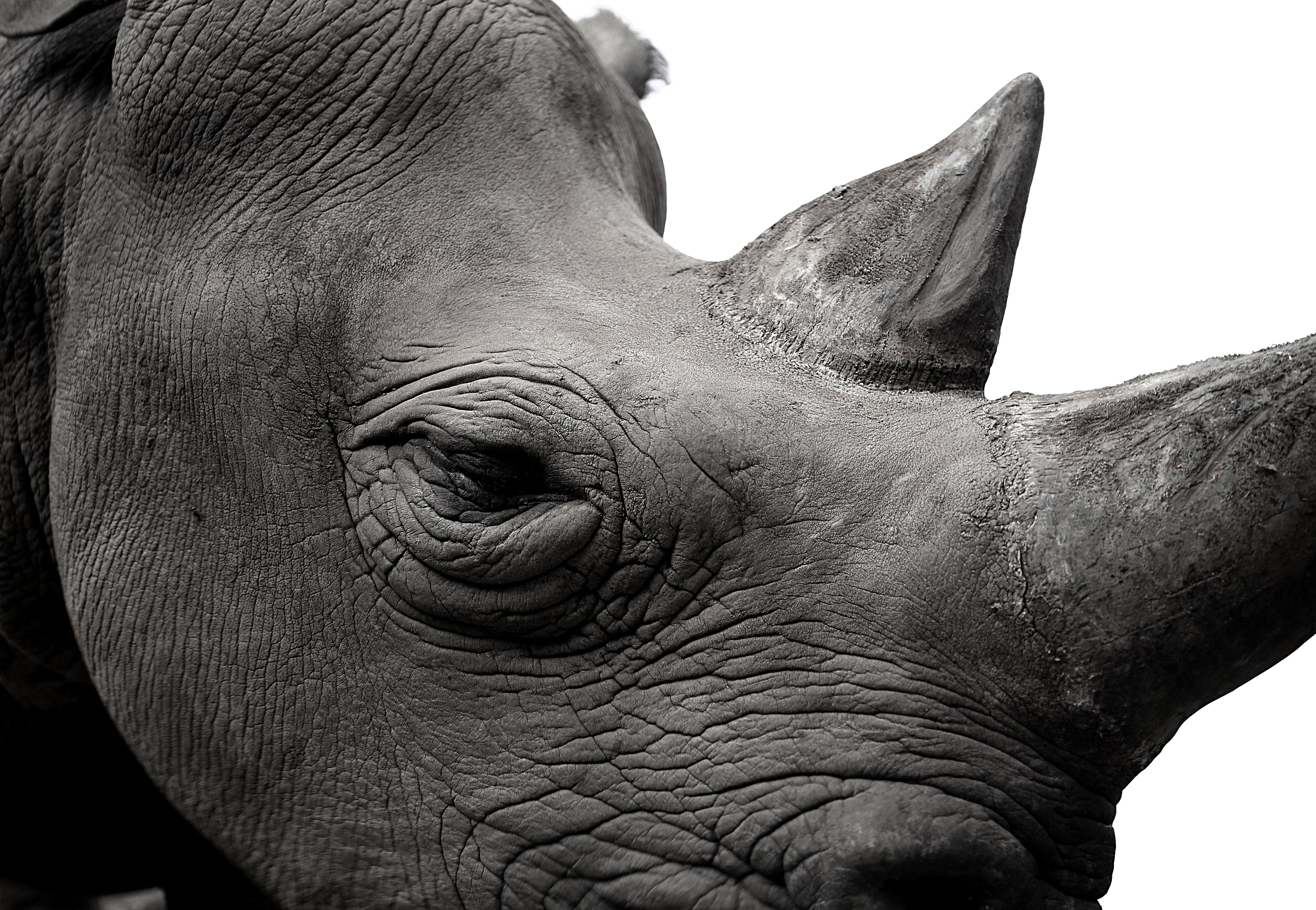 Photograph by Kirsten Brophy, 2017 Nairobi National Park