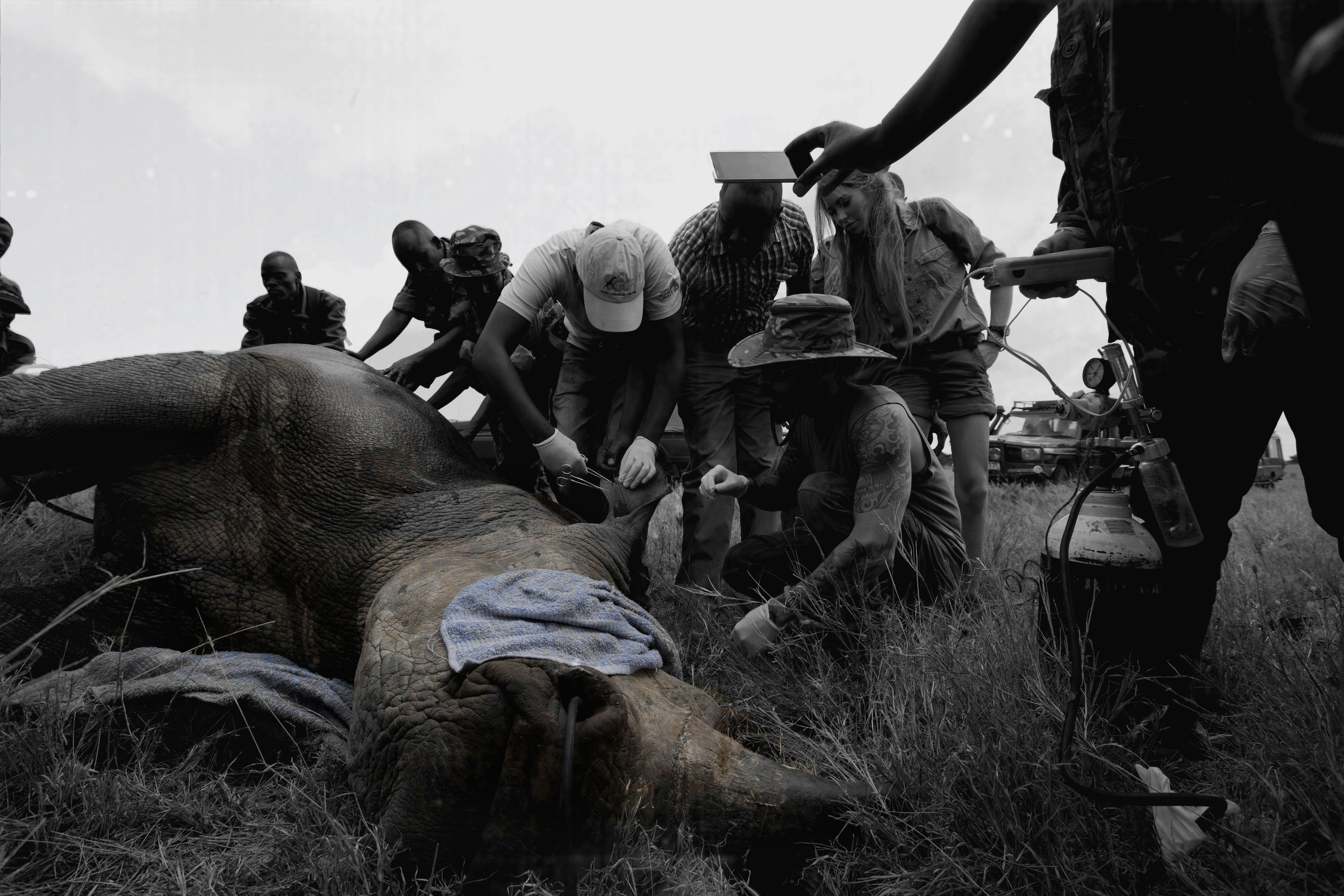 Rhino Conservation final slow.jpg