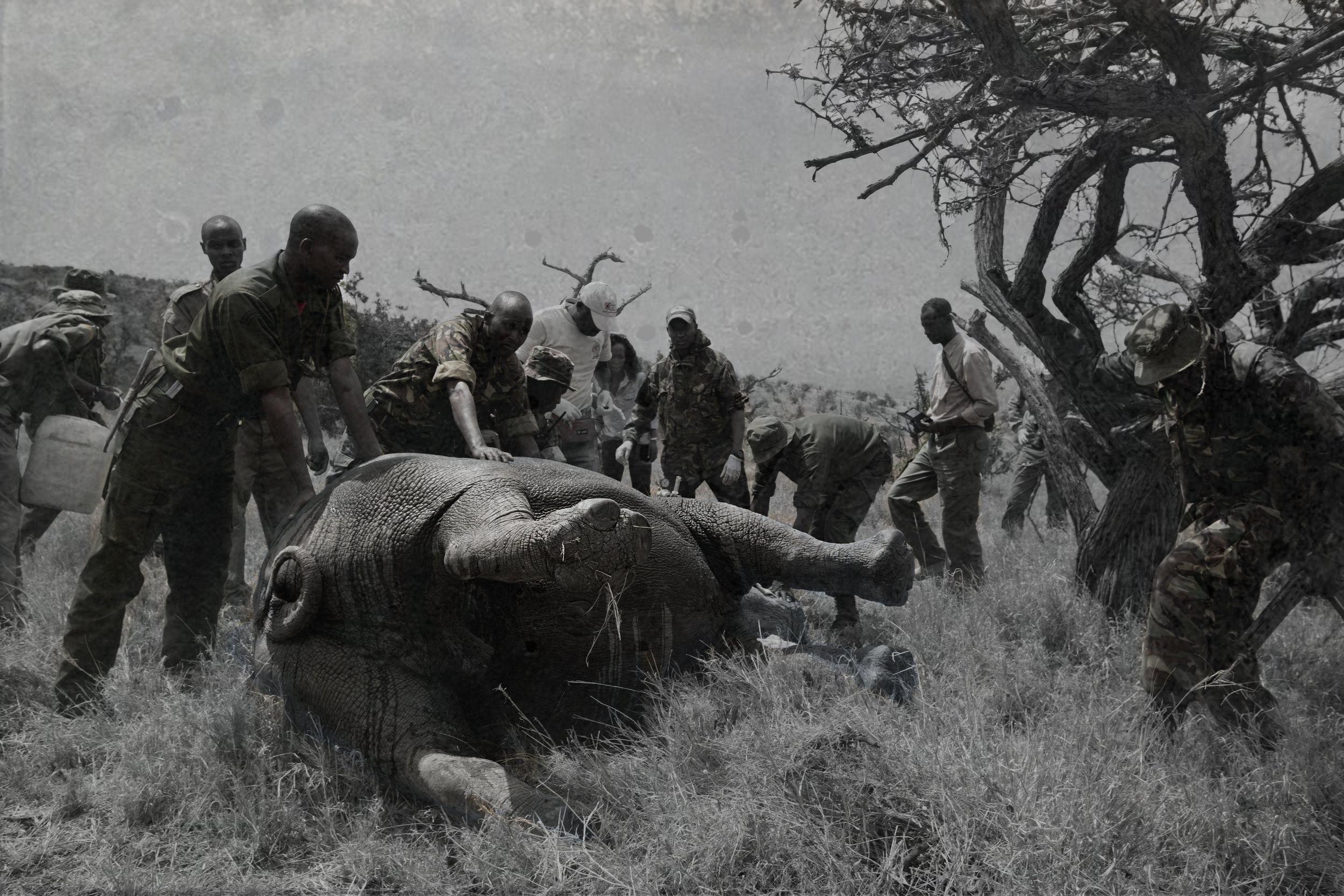 Rhino Conservation 2.jpg