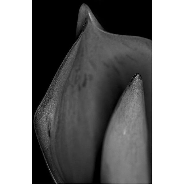 The object of art is also to give life a shape. - #williamshakespeare #shakespeare #poetry #shapes #art #conceptart #design #nature #naturesdesign #flower #plant #garden #darkgarden #photography #flora #naturephotography #mood #inspiration