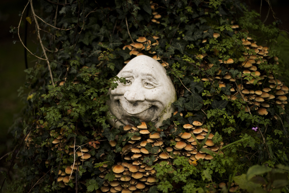 This is our favourite Irish face of the forest.