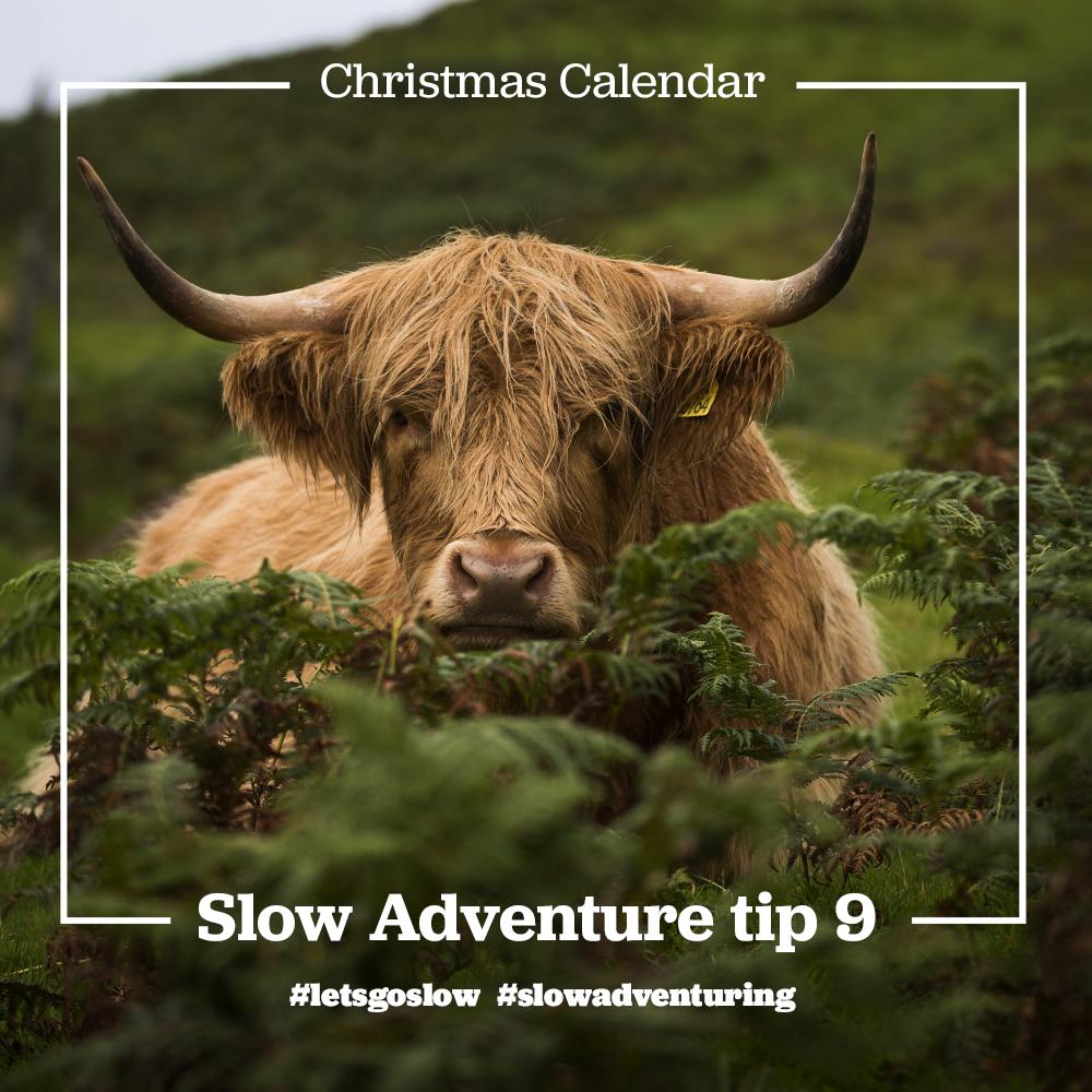 slow-adventure-tip-9-Highland-cow.jpg