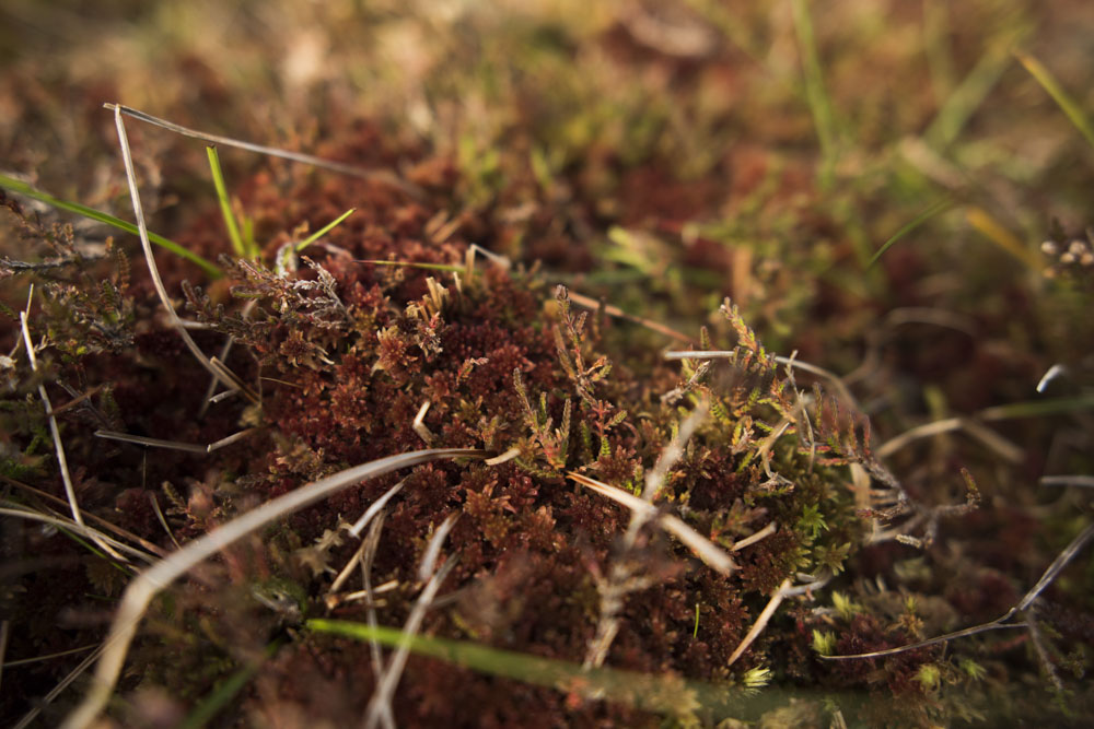Mad about mosses, they're beautiful