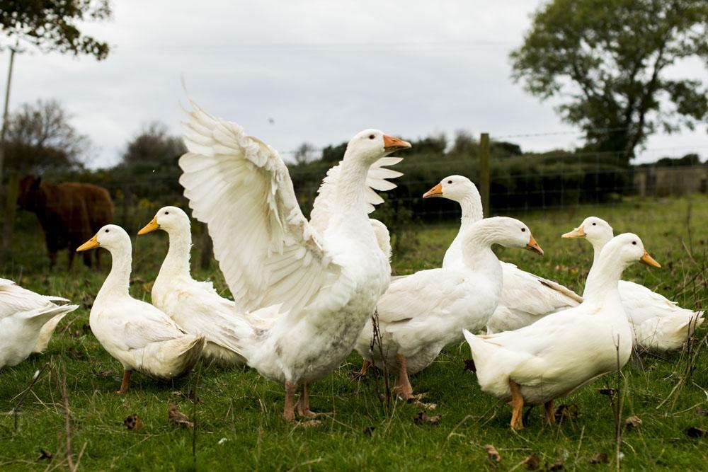 Lets-go-slow-DSC_5785Northern-ireland-Northern-ireland-.JPG