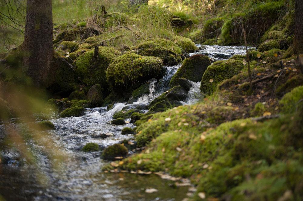Pristine Finnish wilderness