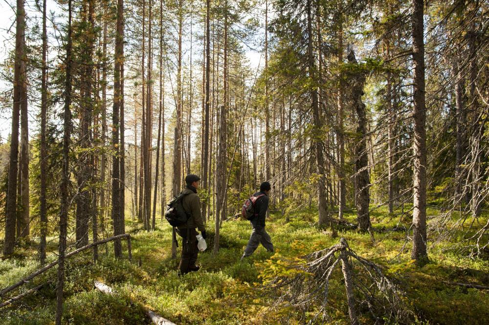 Exploring pristine Finnish wilderness