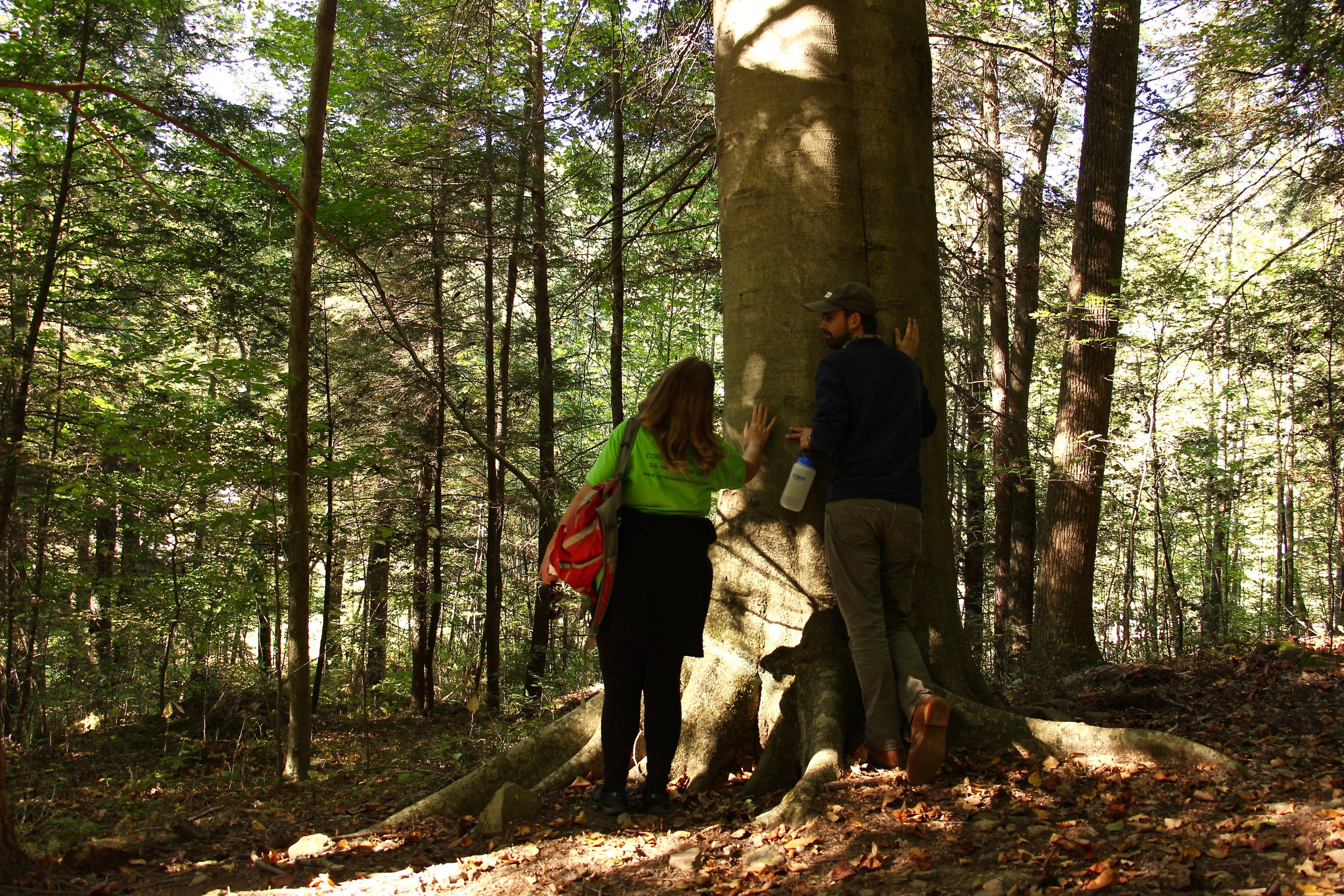 Jenny Williams and Richard Young appreciating one of the larger trees on our hike.