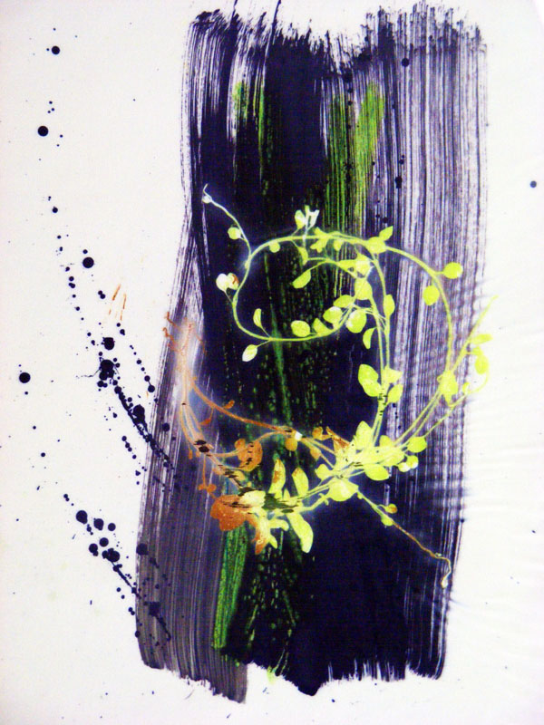 Web 48 | 26cm x 34cm Photographic Print/ Paint on Silk