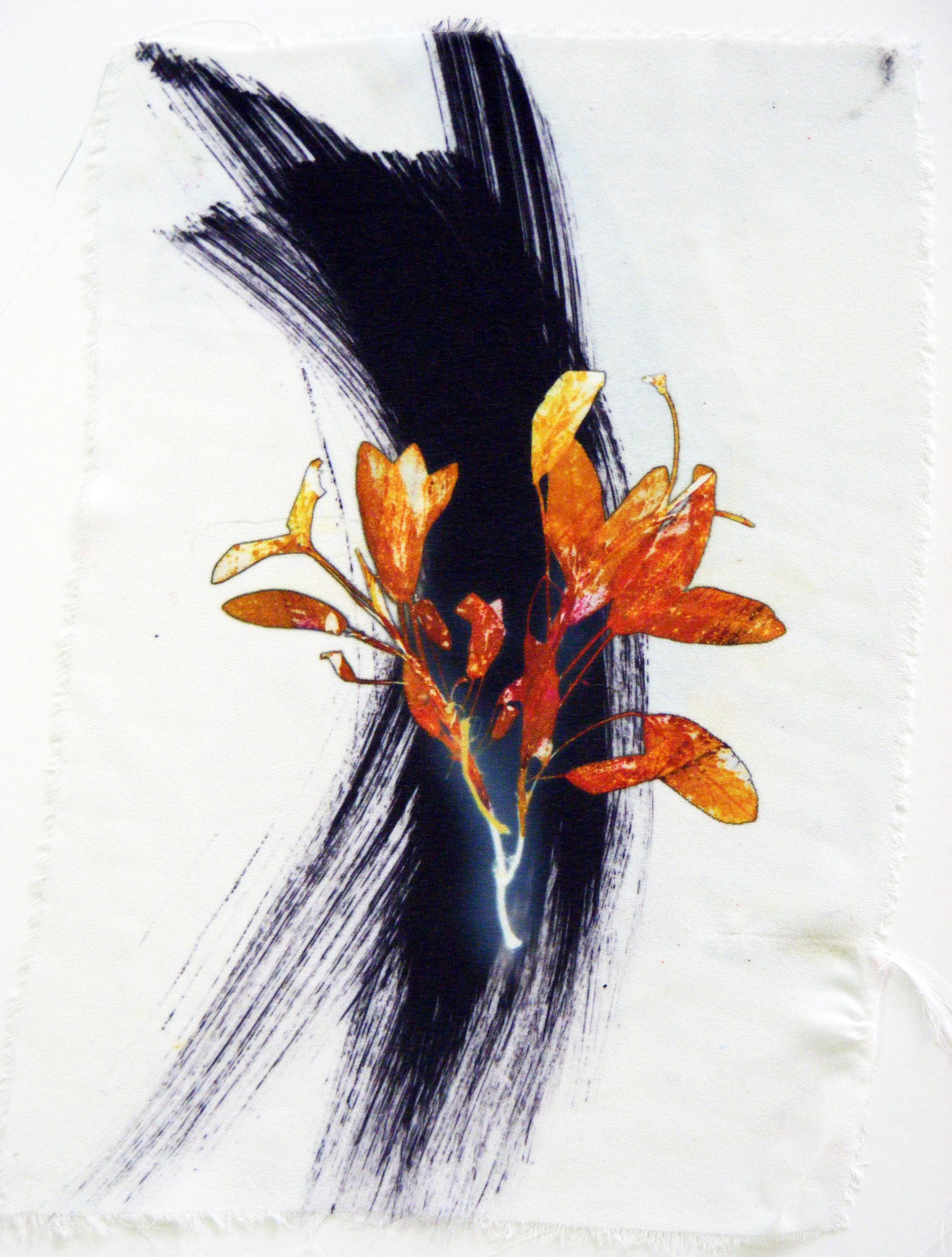 Herb 6 | 20cm x 28cm Photographic Print/ Paint on Silk