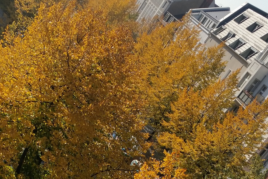 2018-10-13_GoldenOct 0.jpg