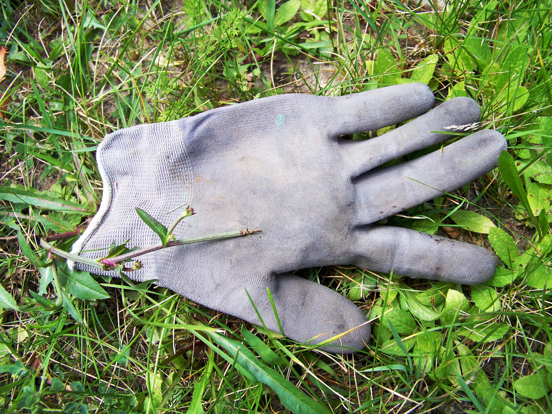 Glove July.jpg