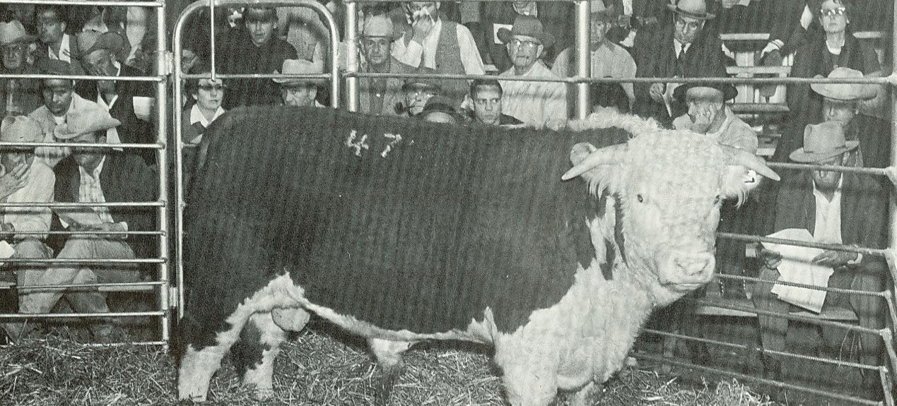 Bull Test Sale 1964