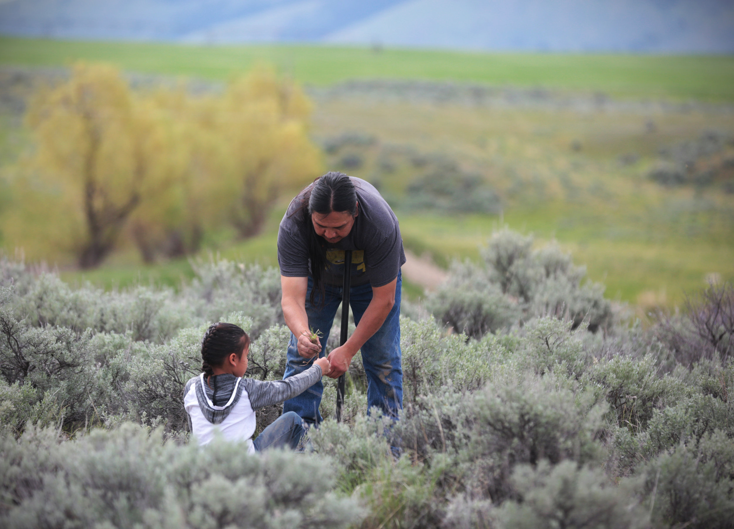 My dad and my nephew, Andrew, 7, dig for bitterroot during the Confederated Salish and Kootenai Tribes' annual gathering on May 9, 2018. The bitterroot was a staple harvest for the Salish people and each year after the bitterroot is dug and peeled, the members return to the Long House to eat the bitterroot and the feast that accompanies it.