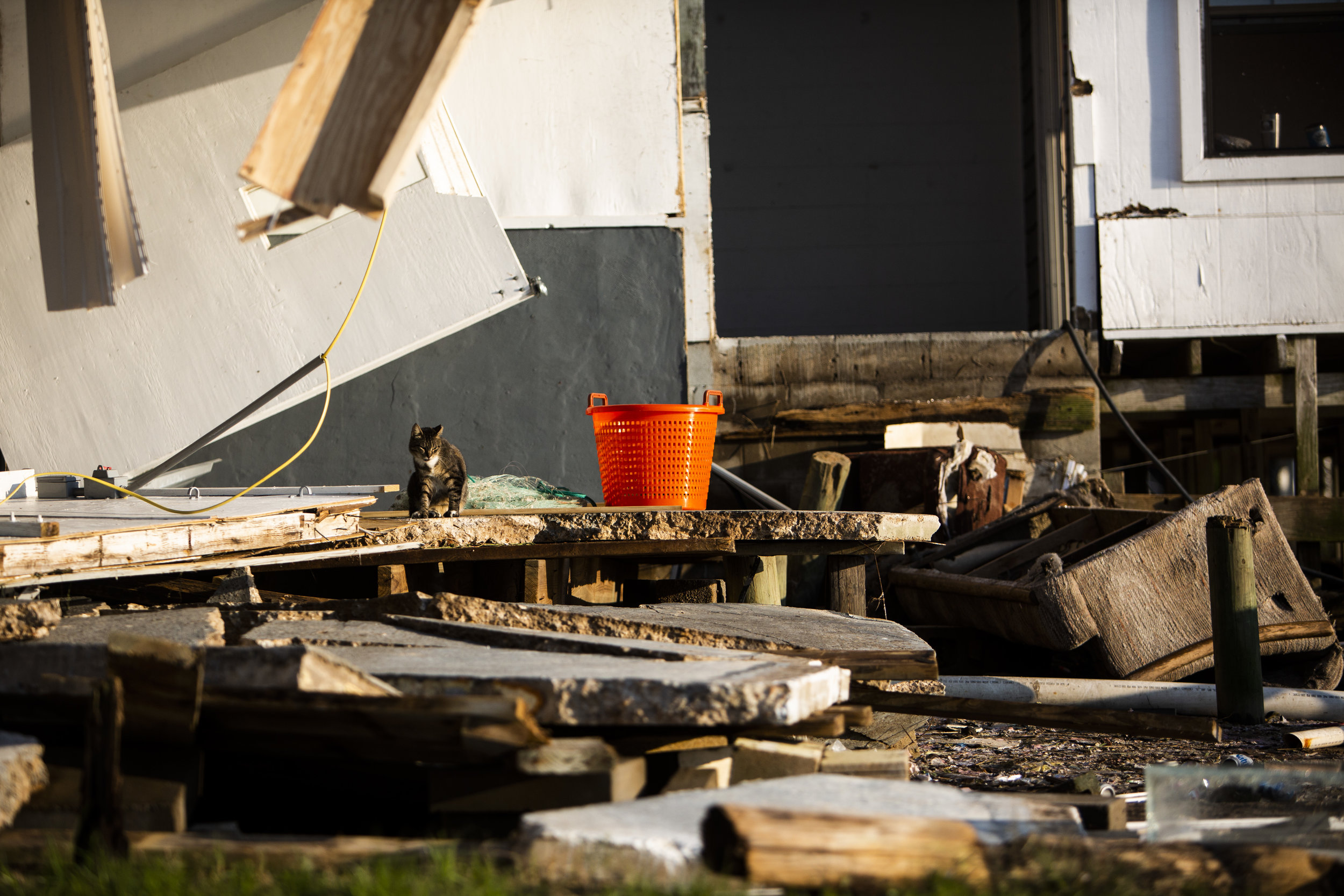 A cat sits on a pile of wreckage in Spring Creek on October 11, 2018. Hurricane Michael demolished the old fishing house when it hit on October 10, 2018.