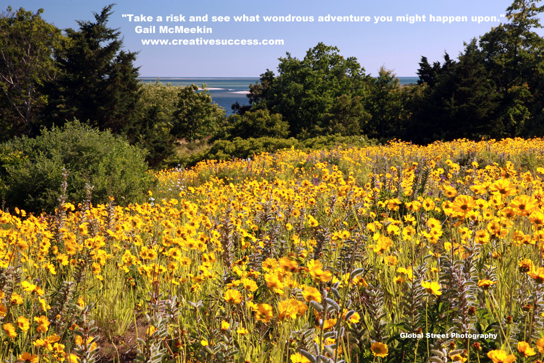 Field_of_Yellow_Flowers_1124.jpg