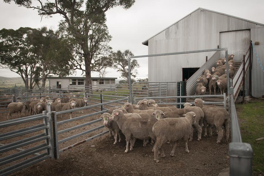 Sheep pen low res.jpg