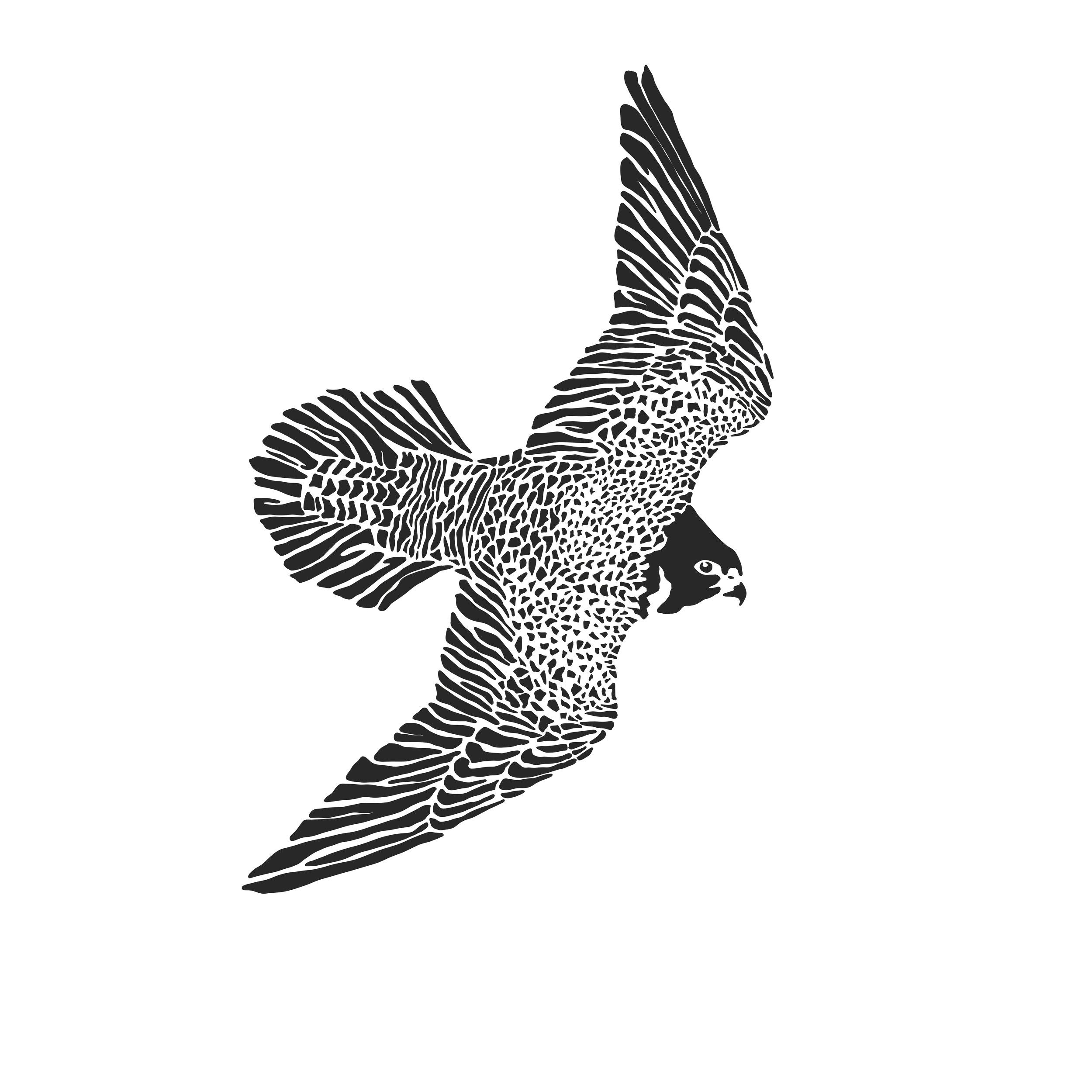 Bryn Merrell Falcon.jpg