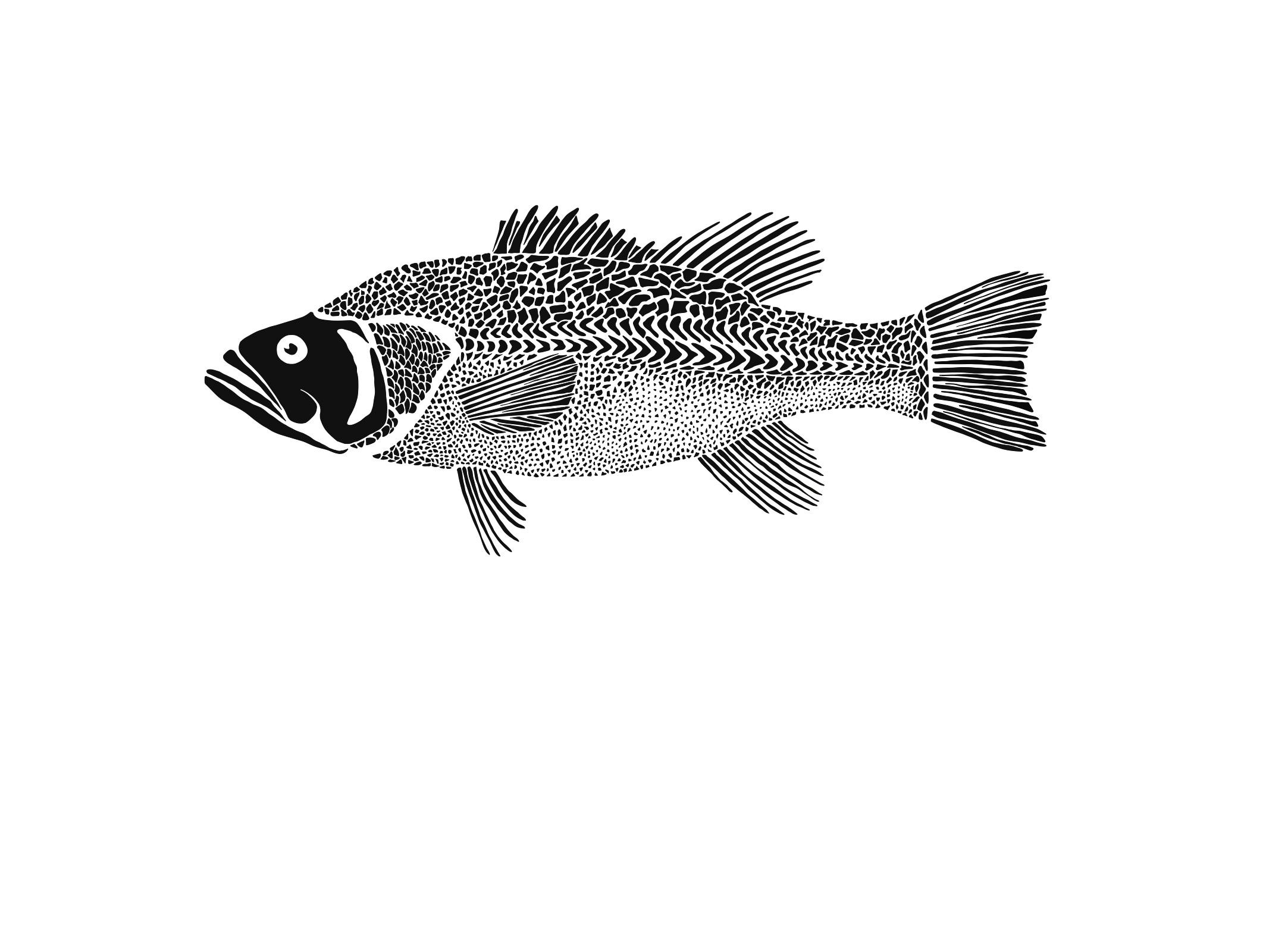 Bryn Merrell Bass.jpg