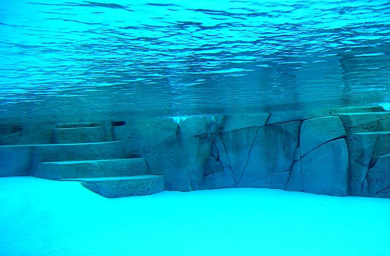 Artificial rock in pool