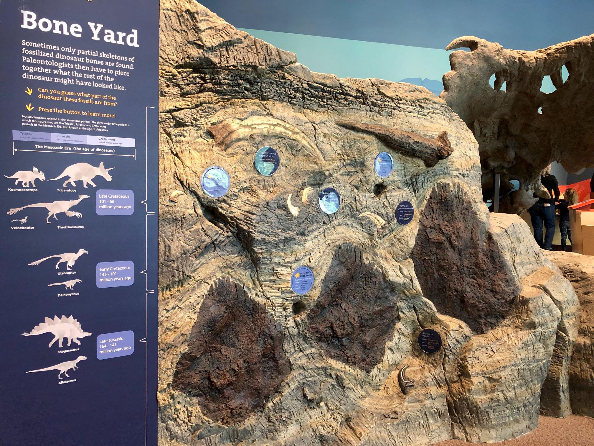 Fossil Wall.jpg