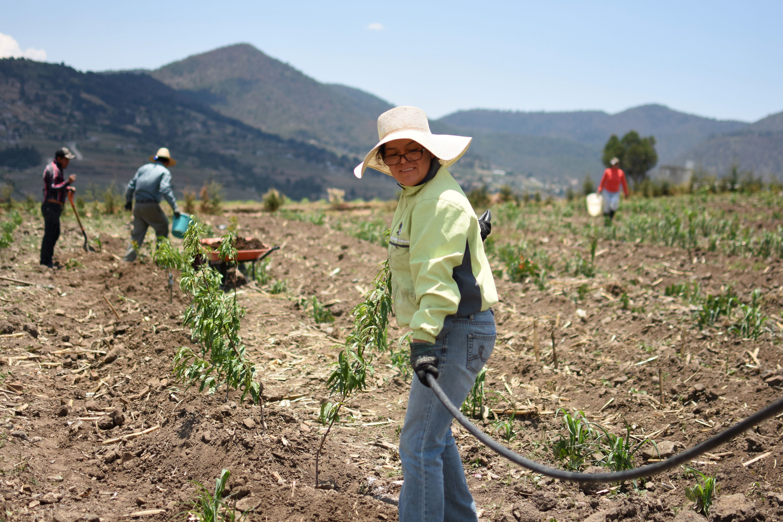 Rocio Albino Garduño waters her crops in San Juan Coajomulco, Mexico. Garduño is a professor of sustainable development at the Intercultural University of the State of Mexico. She uses her farm and home as a way to educate her community about more sustainable farming practices. Image by Meg Vatterott. Mexico, 2018. Part of  Sustainability Utopia Among The Mazahua  story.