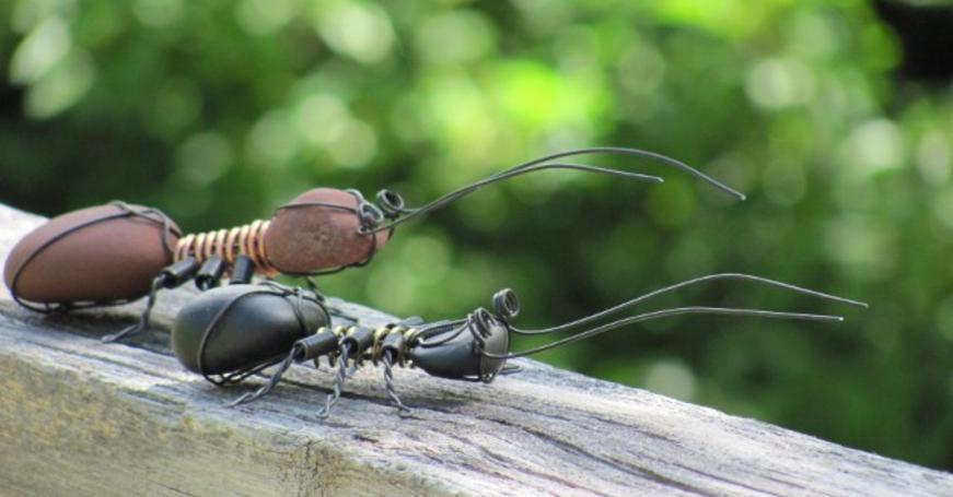 Roszelle Schuff's bugs.jpg