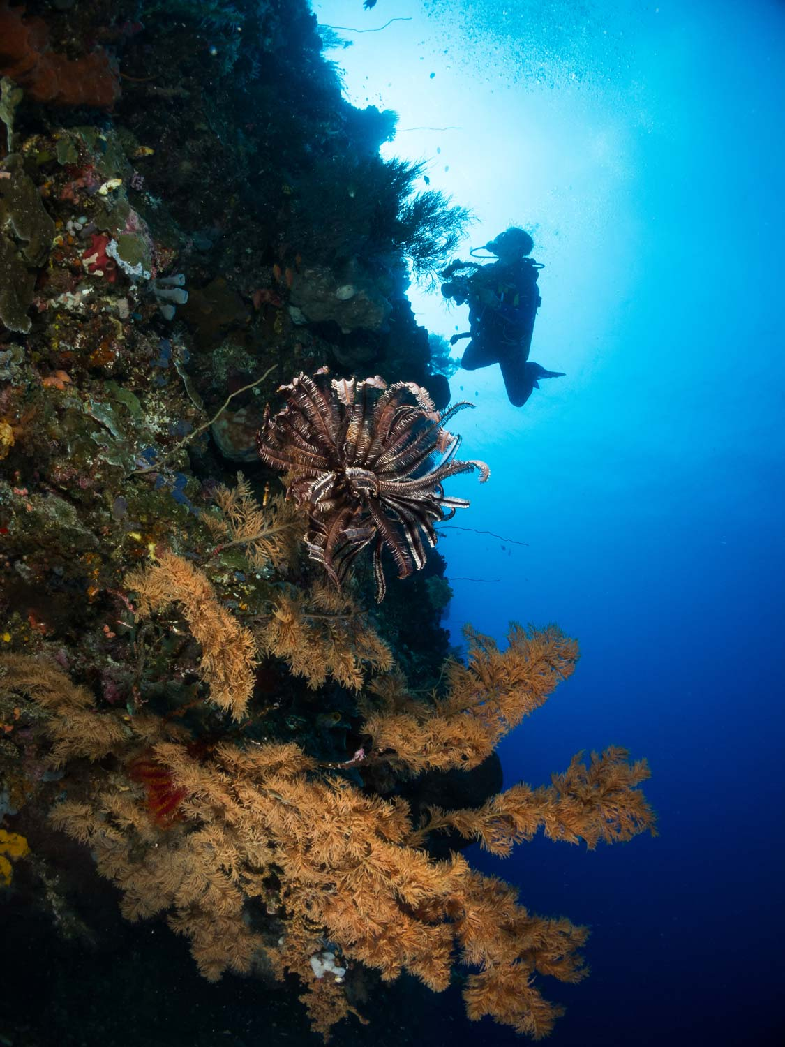 Bunaken_Diving_004.jpg