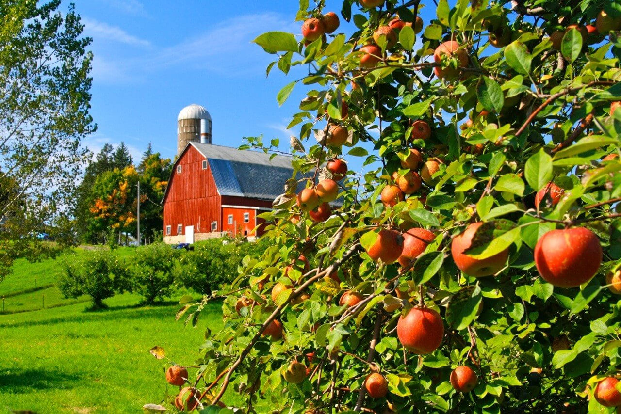 Pleasant Valley Orchard- great pies!