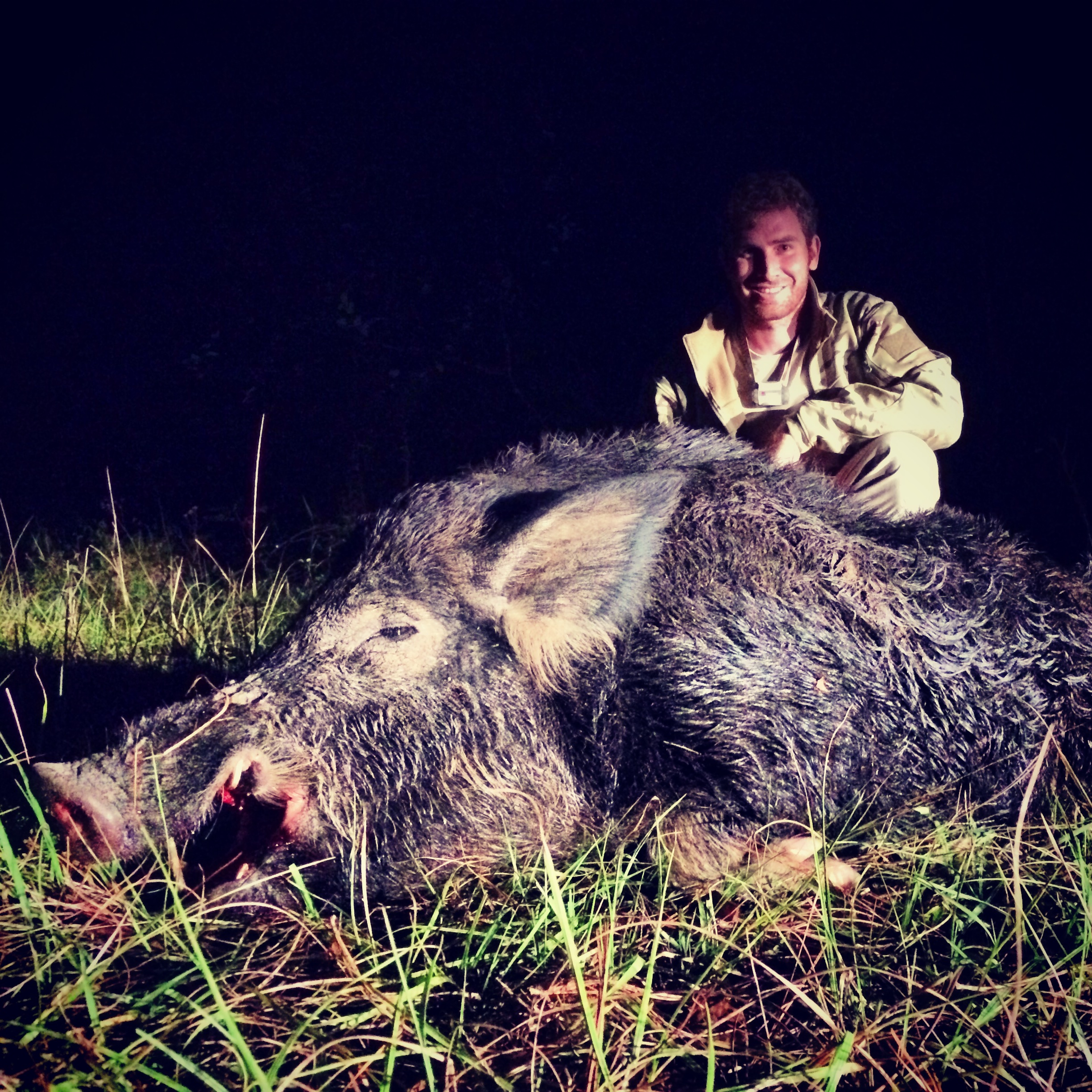 Big old boar