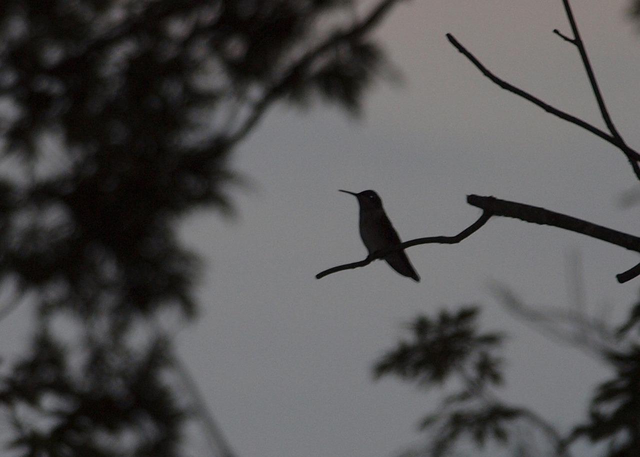 hummingbirds-17582_1280.jpg