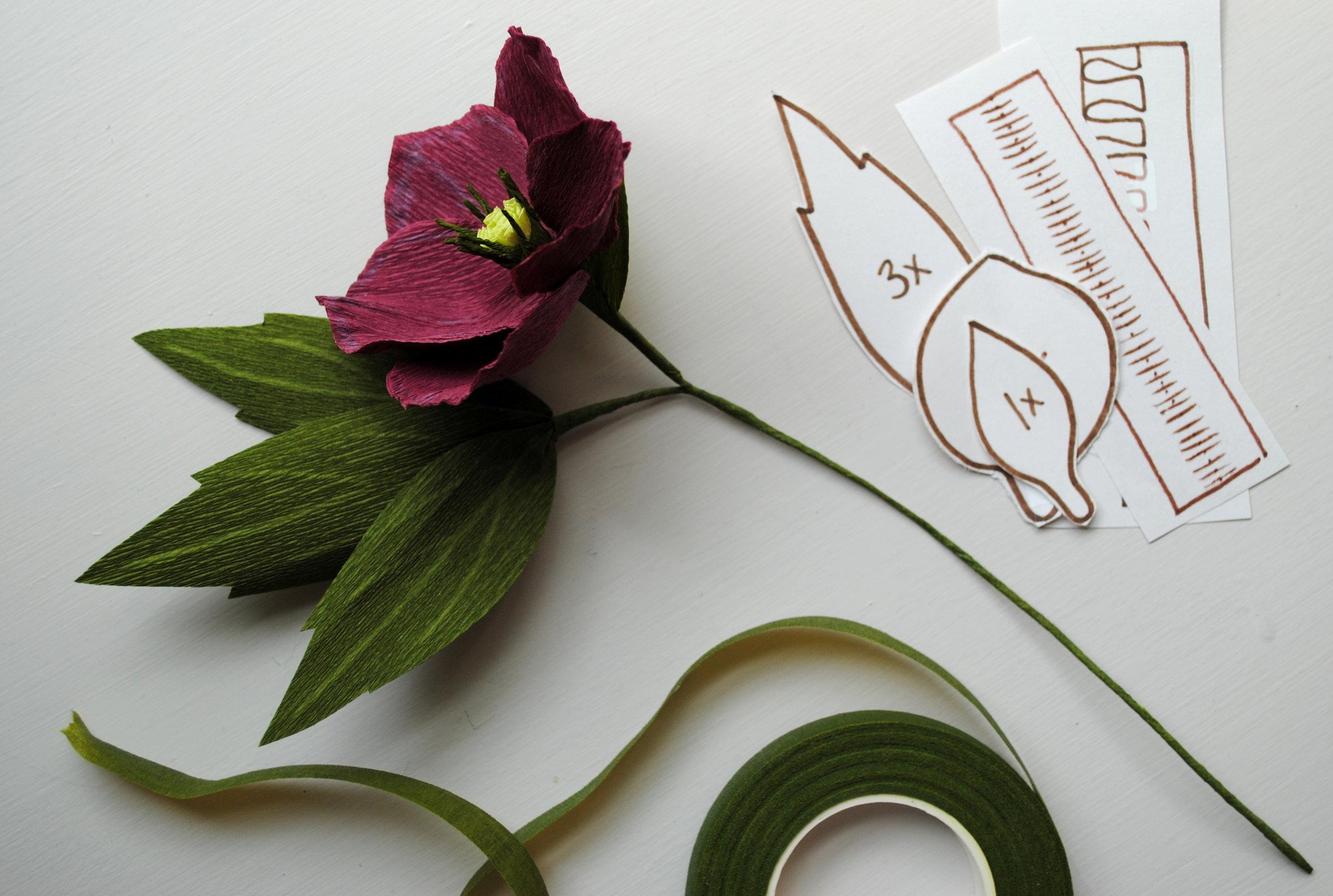 A beautiful crepe-paper hellebore flower!