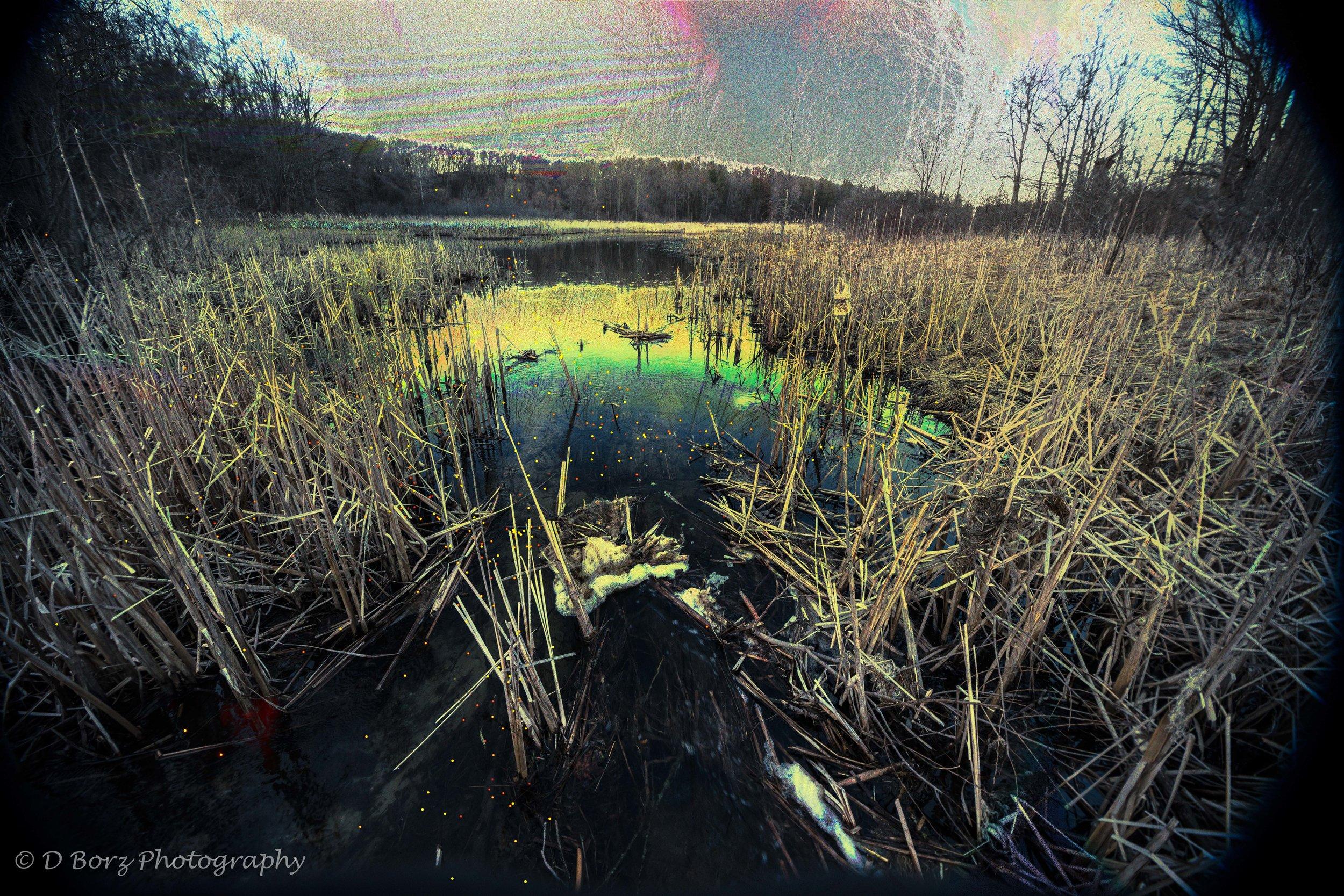 borzkowski_d_soundscape-19.jpg