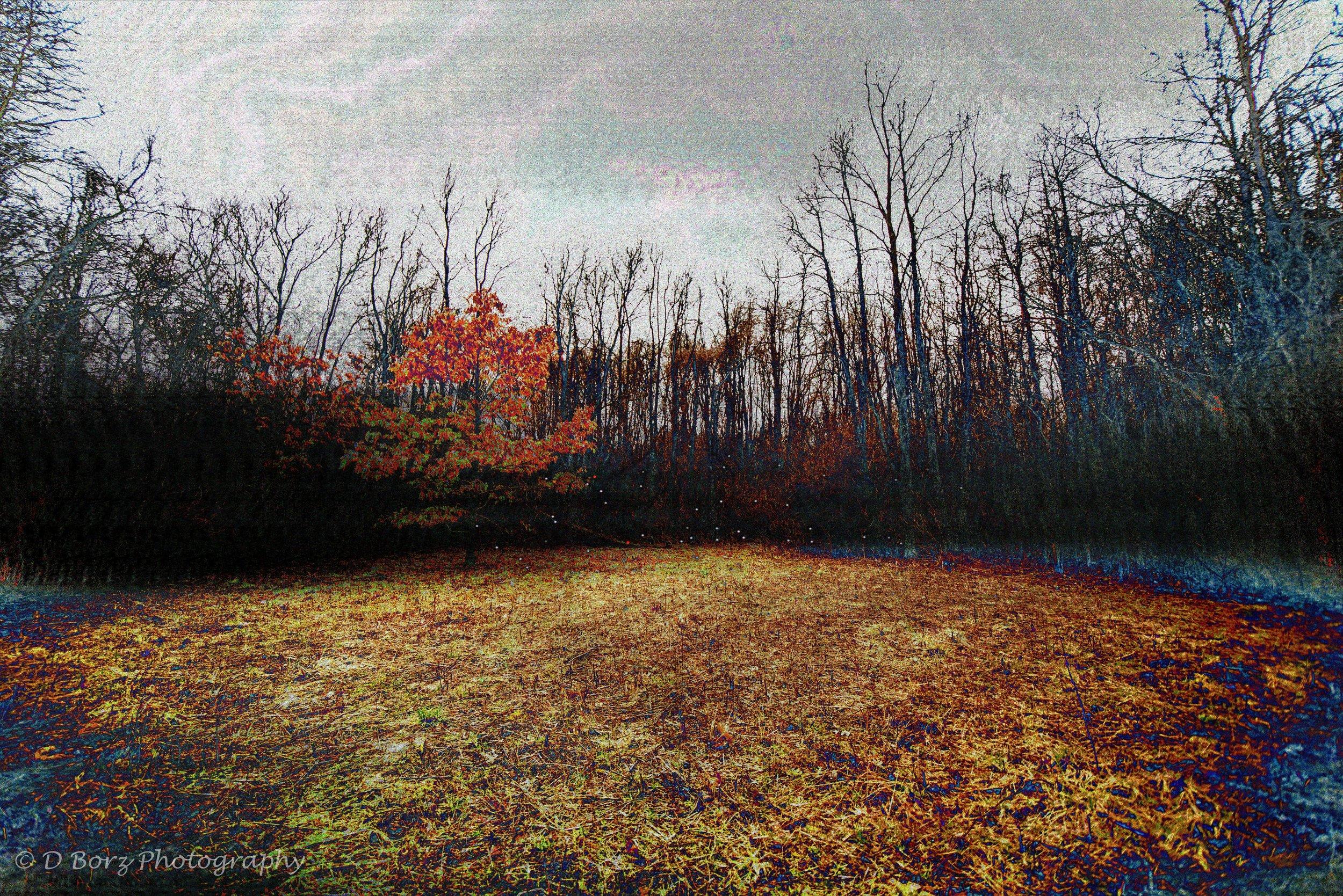 borzkowski_d_soundscape-22.jpg