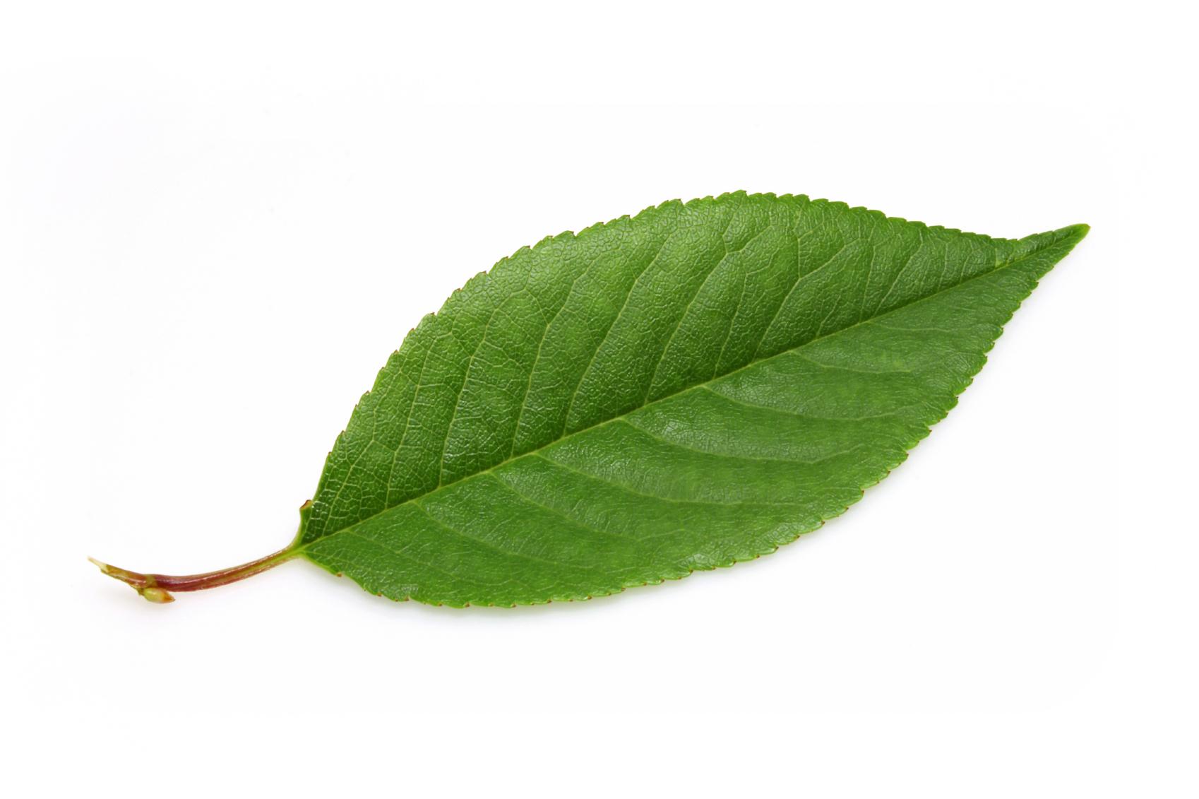 leaf-silhouette-landscaping-atlanta.jpg