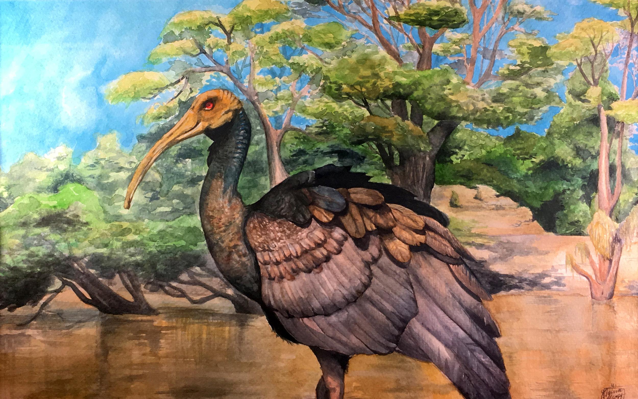 Alaina Elliot  Bird in the Marsh Watercolor  Steinert 19.5x25  Mercer County