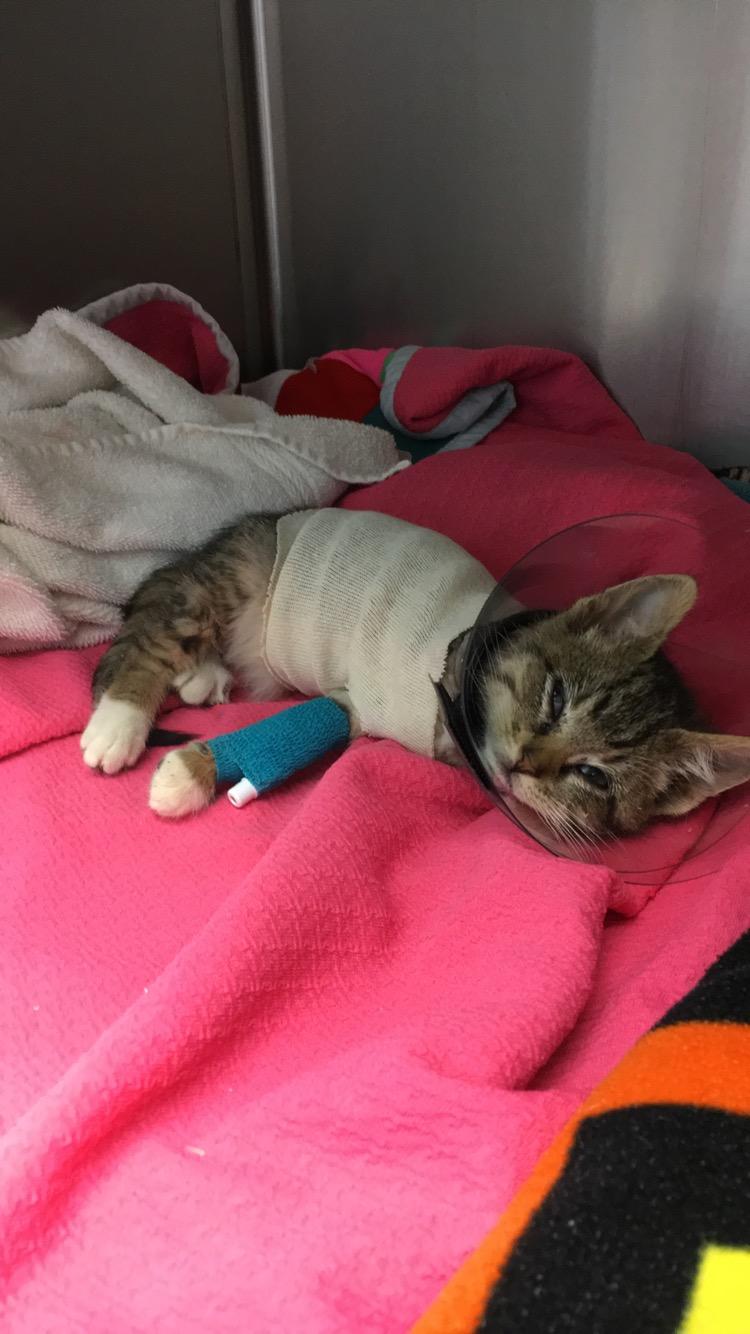 kitten1117aftersurgery1.JPG