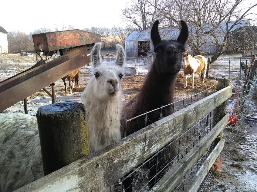 Our Dalai Llama on left with Bash on right!