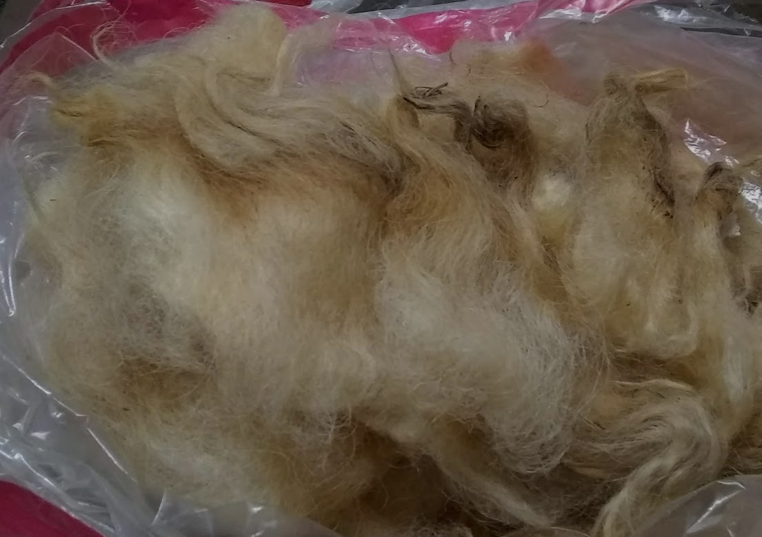 Devlyn's Scottish Black Face wool!