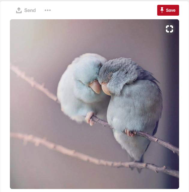 How about a great color scheme inspired by these two love birds?