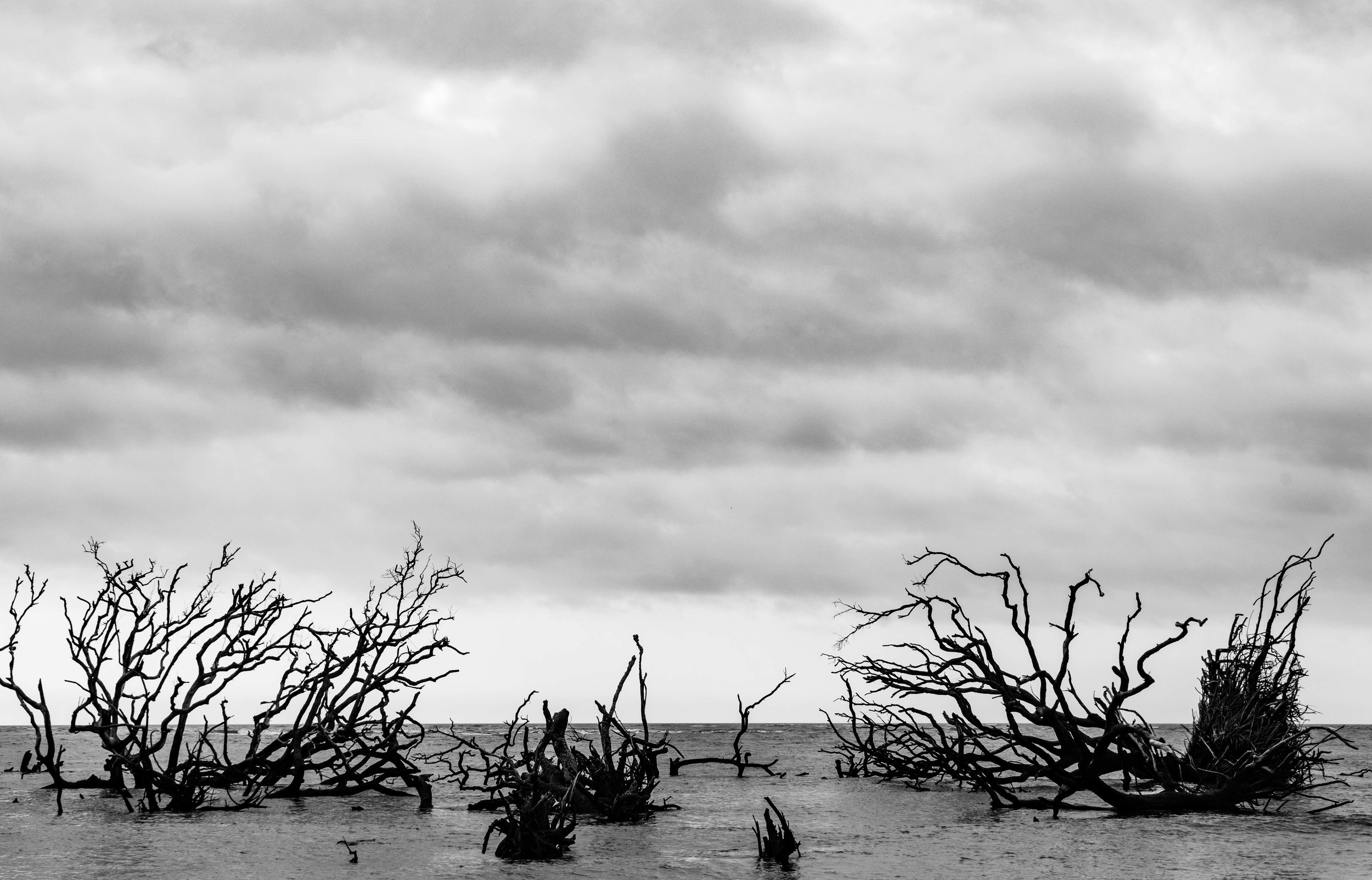 Tree graveyard off the coast of Little Tybee Island via micahdeyoung.com