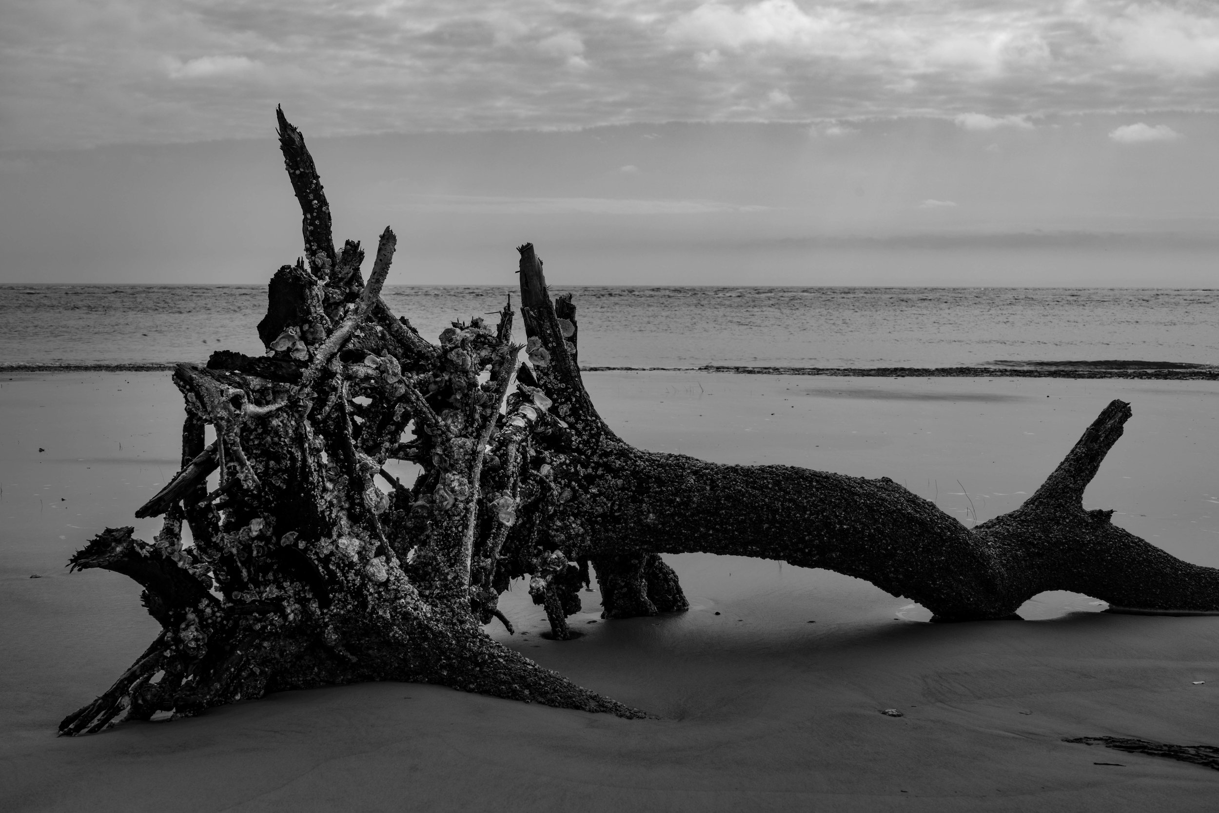 Black & White tree on Little Tybee Island via micahdeyoung.com